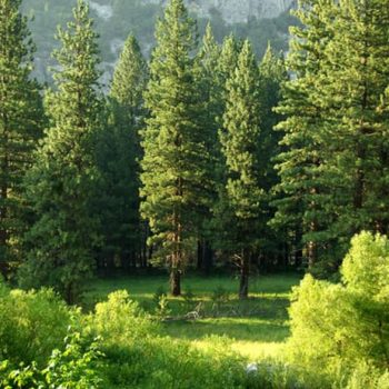 Richard St. Barbe Baker: The Life of the Forests